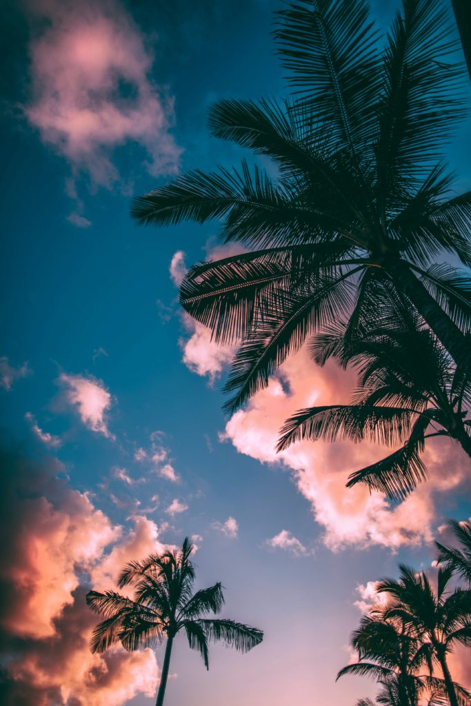 low-angle photograph of palm trees